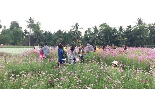 Vườn hoa Mãn Đình Hồng rực sắc chào đón khách tham quan, vui chơi vào dịp Tết
